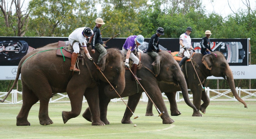 Image result for elephant polo