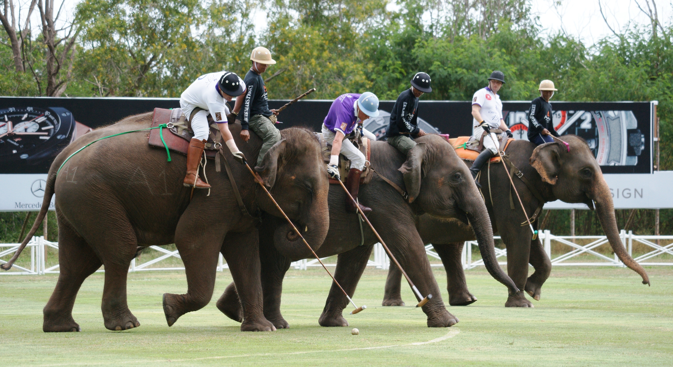 Elephant polo in thailand learn thai with mod elephant polo the biggest weirdest slowest and most expensive game in thailand buycottarizona